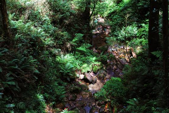 rn rn现代文明孕育了钢铁和玻璃的城市,古老的森林也有数不清的秘密,来到这片树林与山石构成的的仙境,体会森林氧吧的神奇功效。既然登山,为了节省体力,还是带上轻便的rn佳 能 EOS M5&18-55&18-150两颗非常适用的镜头。话不多说,马上开启旅行吧。